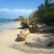 Zapatillas paradise