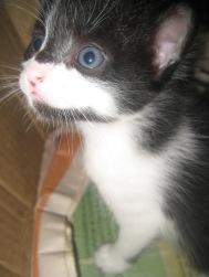 Deel van de beestenboel in mi casita; drie honden, twee katten, en drie kittens