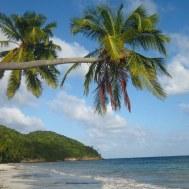 Manchaneel Bay