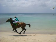 Het winnende paard