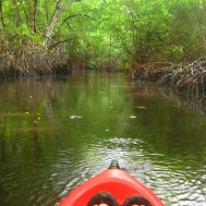 Kayaken in Nariva swamp