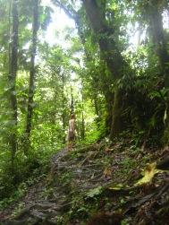 Slipperen door de jungle