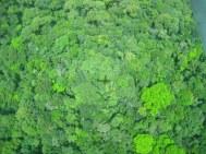 Vliegtuigschaduw op broccolibos