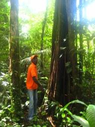 Communicatie in de jungle: de telefoonboom