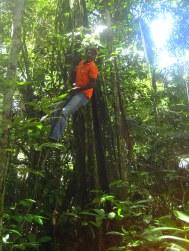 Gids doet Tarzan