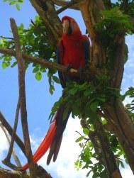 Papegaai slijt dagen als huisdier na door vleugel geschoten te zijn