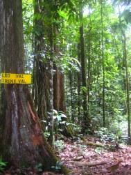 jungletochtje