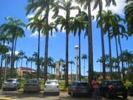 Cayenne, Place des Palmistes