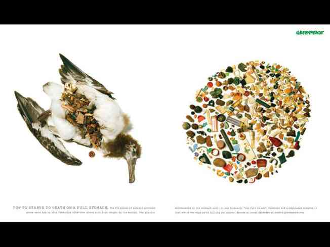 Ook de albatros zit vol plastic