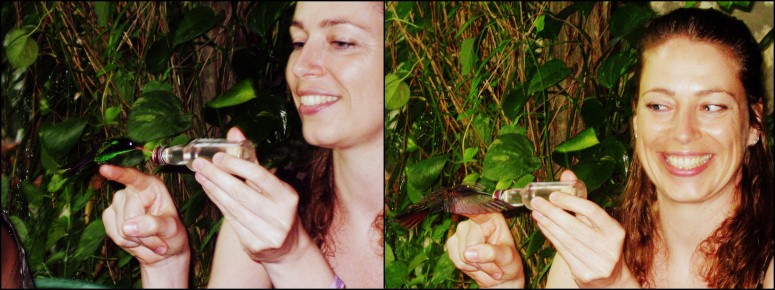 Doctor bird & Jamaicaanse mango