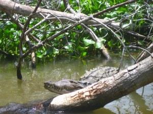 krokodil black river