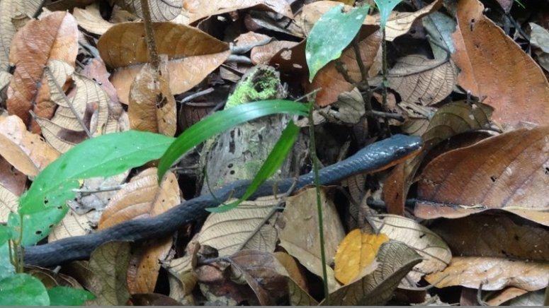 nog onbekende slang