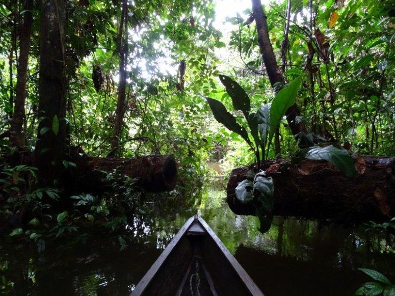 Kano Tacana