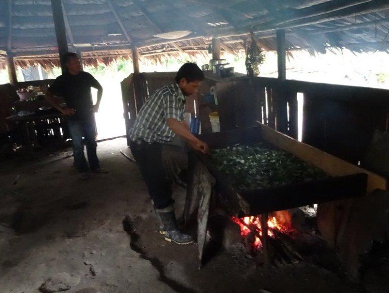 cocabladeren roosteren