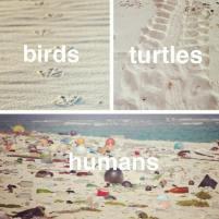 bird turtle human