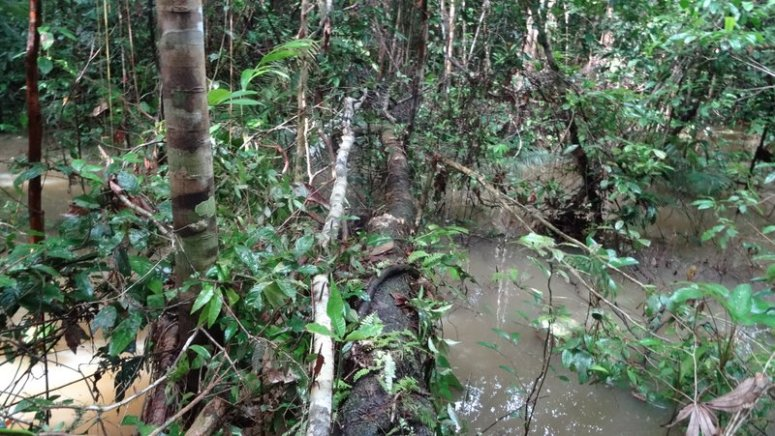 bruggen Agua Blanca