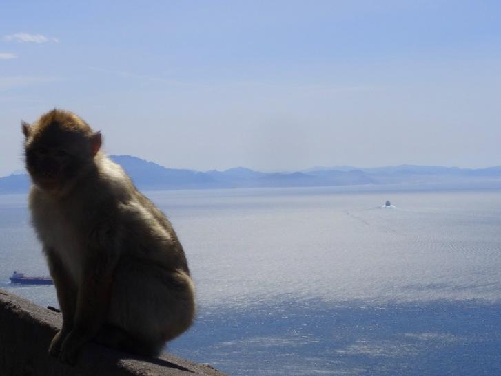 apenrots Gibraltar