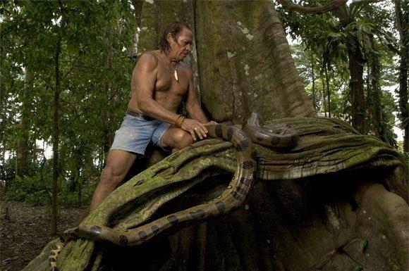 Kapax Amazone