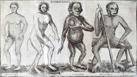 antromorpha 1760